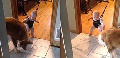 Cadela ensina bebê a pular em vídeo adorável.