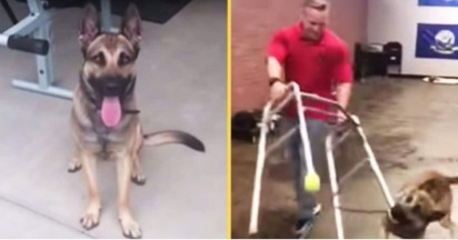 Foto: Youtube/Double H Canine Training Academy