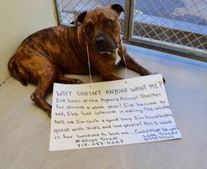 Foto: Agoura Animal Care Center