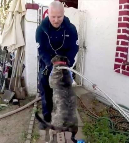 Feliz da vida por ser salvo, o pit bull agradece a socorrista. (Foto: Reprodução / The Dodo)