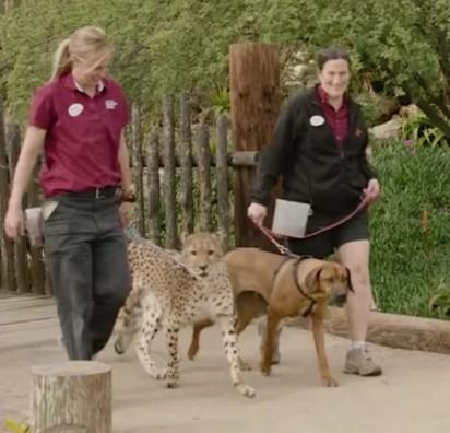 Foto: Youtube / San Diego Zoo Safari Park