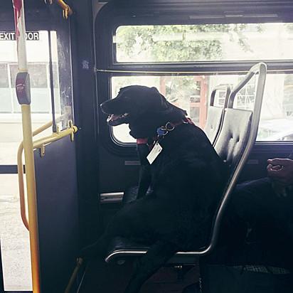 A cachorrinha já tem seu lugar confirmado no ônibus.