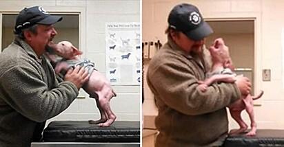 O reencontro de Joey Wagner com o pequeno pit bull foi emocionante.