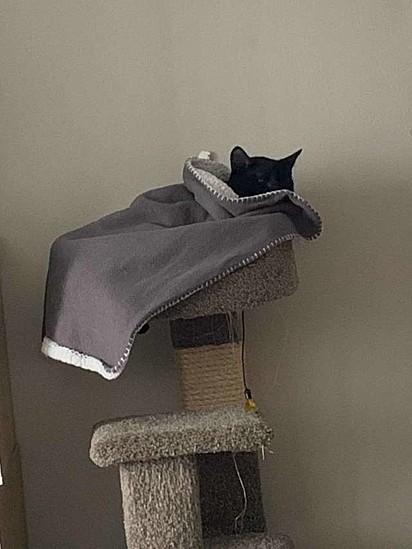 O gatinho adora dormir aconchegado no seu cobertor.