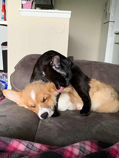 Renly com o seu irmão canino Hotchner.