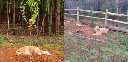 Foto: Santuário de Resgate Estável Horse Creek