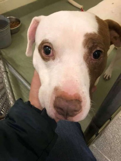 Foto: Ionia County Animal Shelter