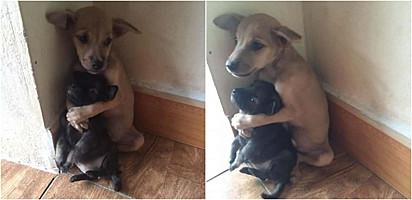 Os cachorros foram encontrados abraçados e assustados.