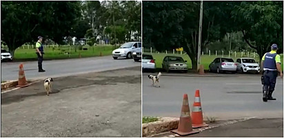 Cachorro sinaliza para agente de trânsito que quer atravessar rua.