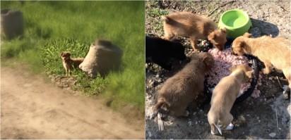 Foto:  Dog Rescue Shelter Mladenovac