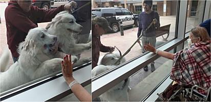 Cachorros visitam sua dona que estava hospitalizada.