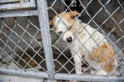 Foto: Reprodução / Baldwin Park Animal Shelter