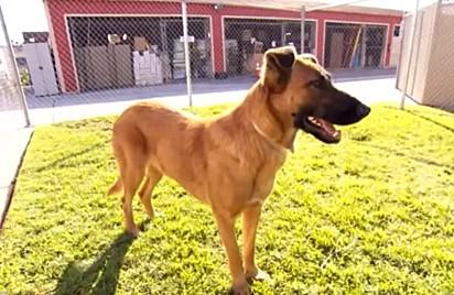 A cadela Zuzu não imaginava que seria trocada por outro cachorro pela sua família.