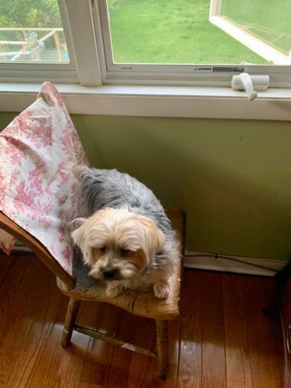O cachorrinho Bowie que vive em Hoboken, Nova Jersey, foi o responsável de salvar a vida do carteiro Morgan.