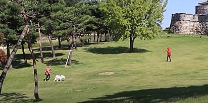 Foto: Reprodução Youtube / MilkyBoki Os rapazes resolveram se encontrar no parque com o cachorro.