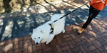 Foto: Reprodução Youtube / MilkyBoki O vídeo da reação do cachorro viralizou no Youtube.