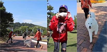 Foto: Reprodução Youtube / MilkyBoki Dono de samoieda usa disfarce para ver reação do seu cachorro ao passar por ele no parque.