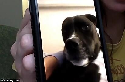 Por causa do isolamento social, a enfermeira conversou com seu cachorrinho pelo celular.
