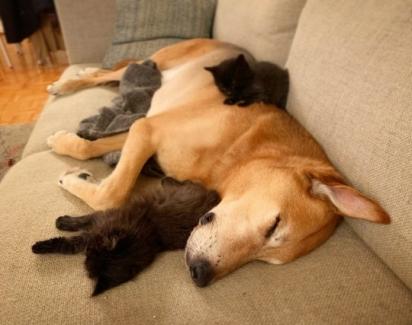 Raylan é muito doce e amigável com os gatinhos. (Foto: Instagram/raylan_the_dog)