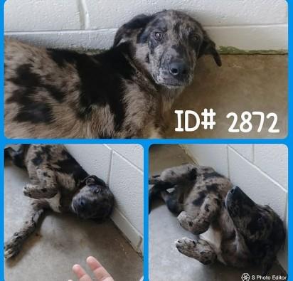 Foto: Facebook / Kingsville Kleberg Health Department Animal Control & Care Center