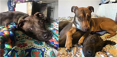 Após adotar cães, jovem se compromete com responsabilidade e se mantém longe do vício em drogas.