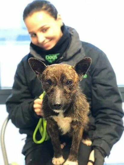 O cachorro foi encaminhado para o abrigo de animais Birmingham Dogs Home.