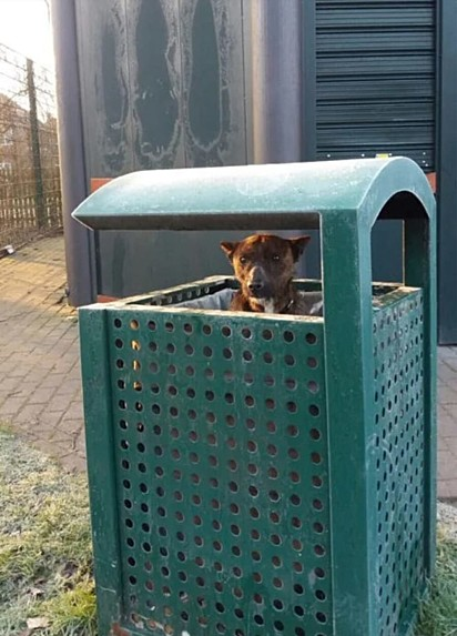 O cachorro entra em lixeira para se proteger do frio em Birmingham, Inglaterra.