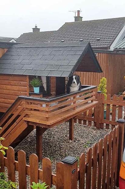 A casa está sendo bem aproveitada pela cadelinha em dias de chuva.