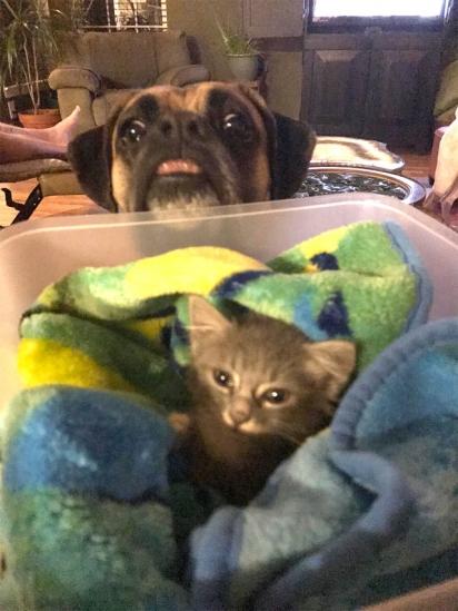Ao levar o gatinho para casa, o cão de Will se apaixonou pelo gato. (Foto: Arquivo Pessoal)