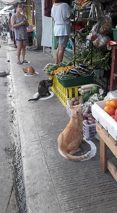 As imagens chamaram a atenção dos transeuntes no local e de internautas do mundo todo.