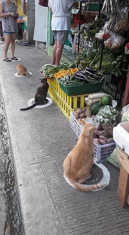 Os gatinhos deram um show de educação ao distanciamento social.