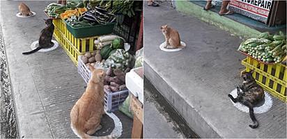 Os felinos foram fotografados em frente a um supermercado de Quezon City, nas Filipinas