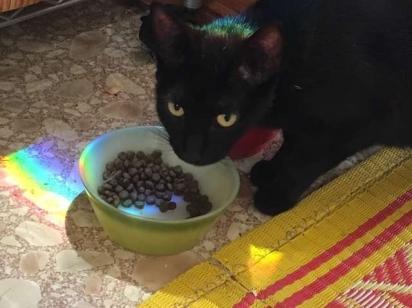 Floreak passou a alimentar a gatinha. (Foto: Arquivo Pessoal/Ida Floreak)