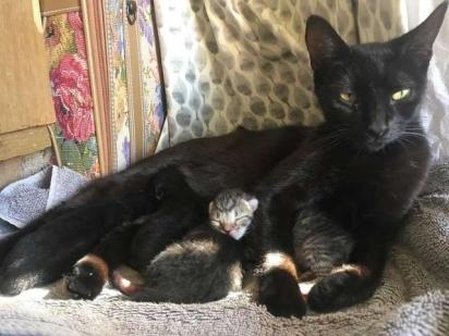 A pintora deu todo o suporte necessário para a pequena família felina. (Foto: Arquivo Pessoal/Ida Floreak)