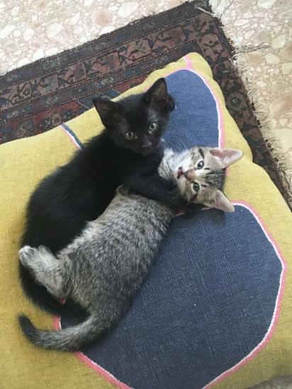 Os filhotes foram adotados e a gatinha Salami foi adotada por Floreak. (Foto: Arquivo Pessoal/Ida Floreak)