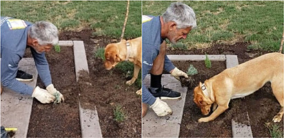 Jardineiro encontra maneira genial de plantar suas mudas sem precisar de uma pá.