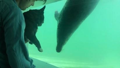 Foto: The Cornish Seal Sanctuary