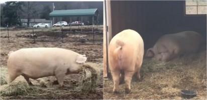 Foto: Reprodução Facebook / The Gentle Barn