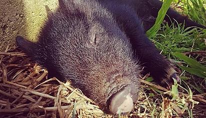 James dormindo tranquilo no santuário de animais.