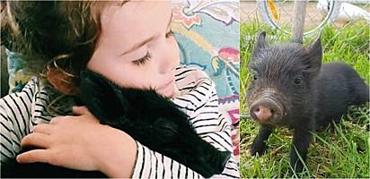 Leitão resgatado após perder mãe é acolhido por santuário de animais na Austrália.
