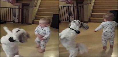 Foto: Reprodução / Rumble Bebê aprende a rodopiar enquanto cachorro era treinado pelo pai.