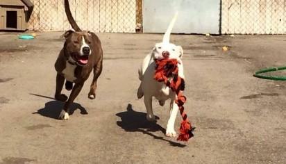 Foto: Facebook / @UnleashedPetRescue Marshmallow e a sua amiga Scooby.
