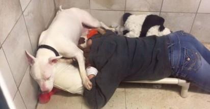Foto: Facebook / @UnleashedPetRescue A equipe aproveitou o dia para brincar e abraçar o filhote triste.