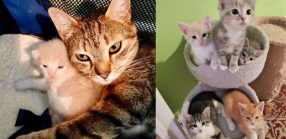 Foto: Friends of Anne Arundel County Animal Care