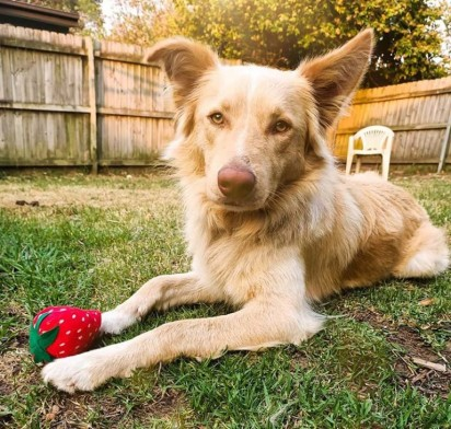 Foto: Facebook/A Better Dogspotting Society/Hayley Martin