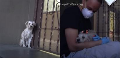 Foto: Reprodução /  Hope For Paws - Official Rescue Channel