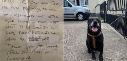 Foto: Reprodução / Swale Borough Council Stray Dog Service