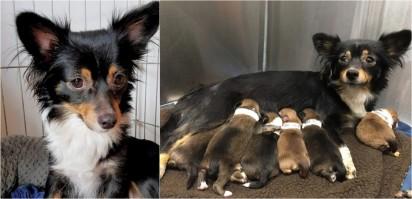 Foto: Reprodução / Hope For Paws