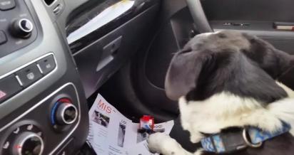Vargas encontrou o cão deitado em frente a uma casa. (Foto: Reprodução Youtube/Anabel_V)