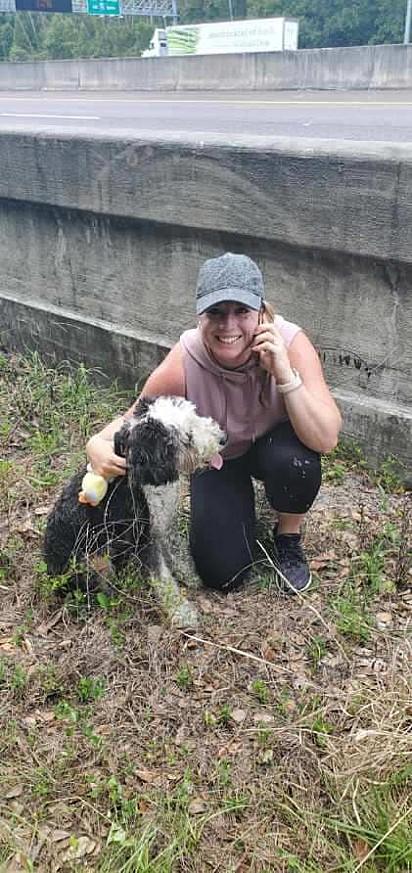 O cão foi encontrado por uma mulher que passava pela rodovia de carro.